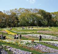 大花壇の公開 5月6日まで