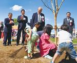 横浜緋桜の根元に土を被せる子どもたち