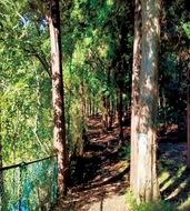 森や寺社を巡る