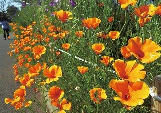 園路を彩る花々※4月21日撮影