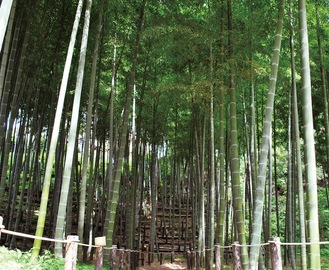 裏庭の竹林
