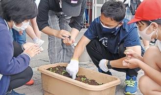 児童と内田さん(右から2番目)が苗を植え替えた