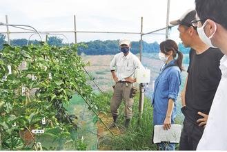栽培状況を確認しあう営農者や市職員ら