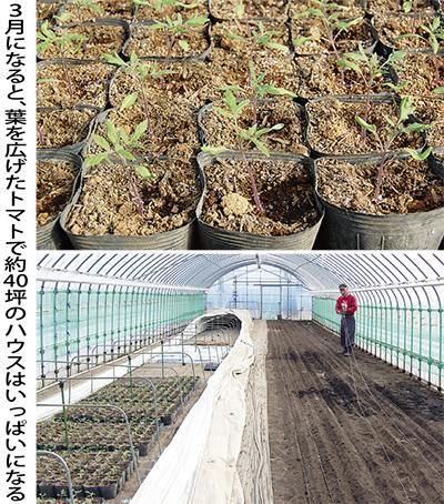 温度管理が重要なトマト栽培
