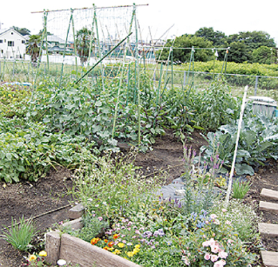 市民農園の利用者募集