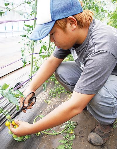 野菜作りは品種選びから