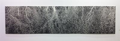 「木の根」描き特別賞