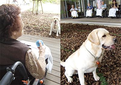 犬と遊べる老人ホーム