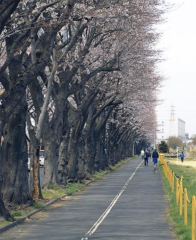いつか日本国中に遊歩道を