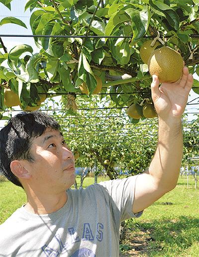 果樹の収穫始まる