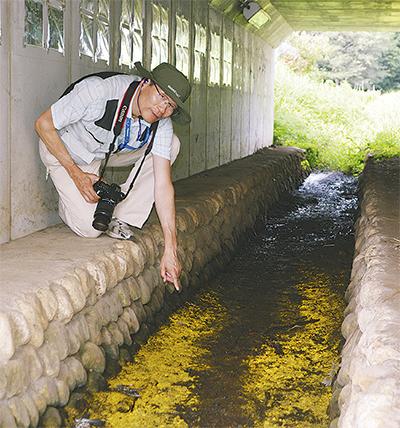 和泉川源流にヒカリモ