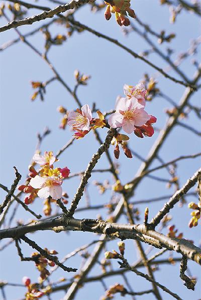 一足早く春の訪れ