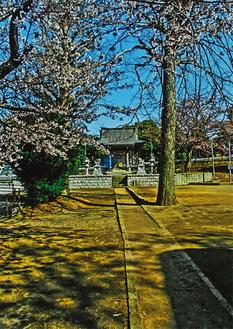 八幡神社(2012年4月7日撮影)