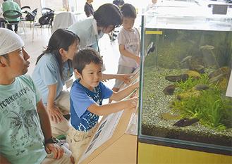 魚を観察する子どもとスタッフら