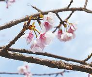 春の便り少しずつ