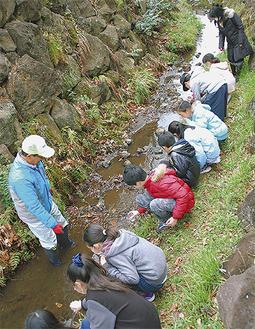 川へ幼虫を放す児童
