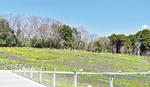 「里山ガーデン」を彩る大花壇