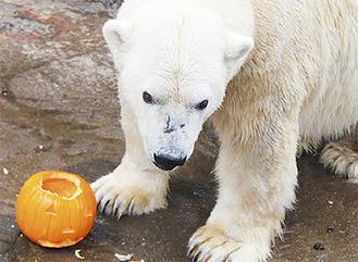 かぼちゃをプレゼント(同園提供)