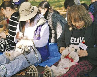 犬とのスキンシップ方法を学ぶ参加者ら