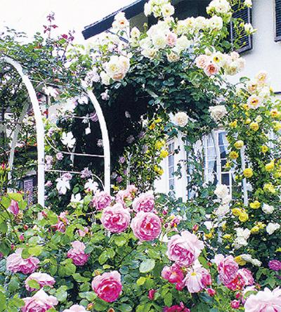 区民が育てた花々を見学できる※写真は昨年