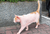ピンクのネコ発見!