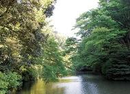 瀬上市民の森新緑ウォーク