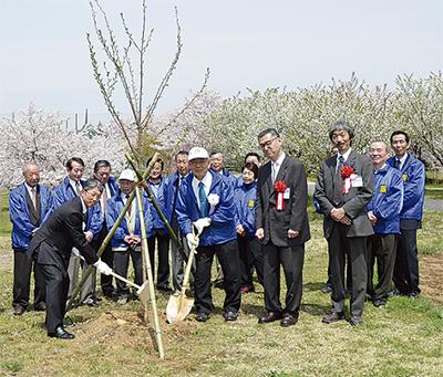 神明台で桜植樹
