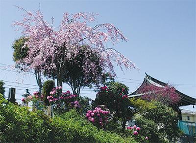 横浜を一望する墓苑
