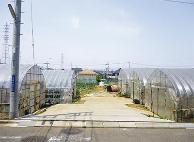 中田駅からのんびり散歩