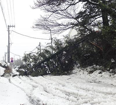 大雪の影響下飯田で倒木