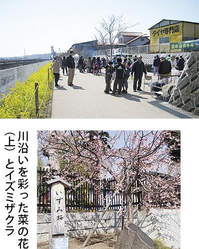 和泉川に黄色の帯