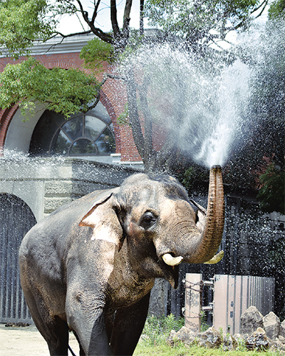 ゾウが涼をお届け
