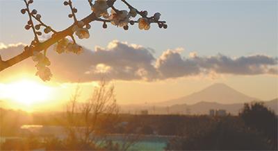 横根稲荷からの富士山