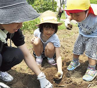 収穫したじゃがいもを手にする今井彩乃さん(中央)