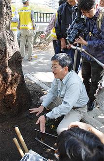 回復途中の桜の根元を見せ説明する安部さん