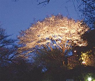 夜桜も堪能(写真はイメージ)