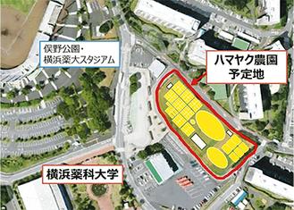 ハマヤク農園のイメージ図(横浜薬科大学提供)