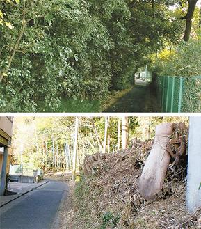 伐採前は昼でも暗かった(上)が現在は明るくなっている(横浜市提供)。