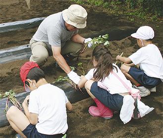 児童に苗の植え方教える金子会長