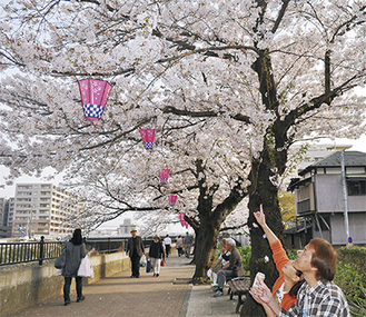 桜を見ながら花見を楽しむ夫婦