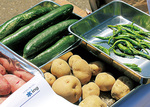 下水からつくられた肥料をつかい、校内で育てられた野菜