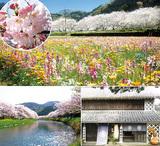 春の伊豆松崎ぶらり散歩