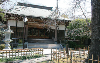 樹齢700年以上のイチョウを前にする本堂