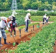 「野菜づくりの場」運営20年