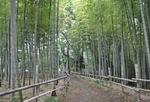 「竹林広場」では見事な竹林が