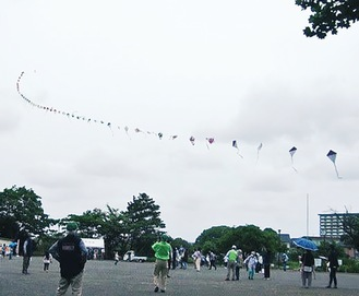50連凧を見上げる参加者=提供写真