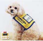 小型犬が活躍する聴導犬