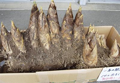 1本の根にずらり14個