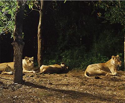 ひと味違う動物園