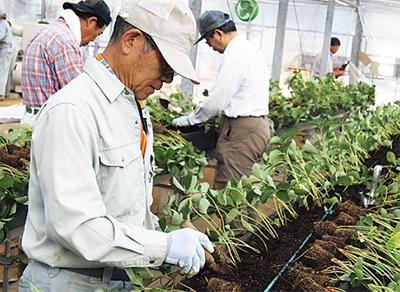 「農作業手伝います」